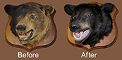 bear mount restoration work