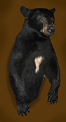 bear upright mount