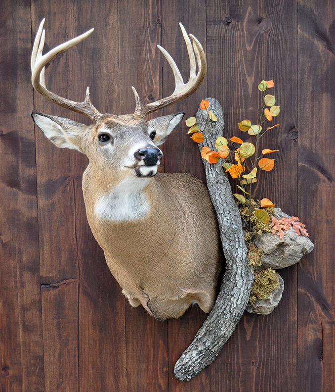 The Complete Guide to Turkey Taxidermy How to Prepare