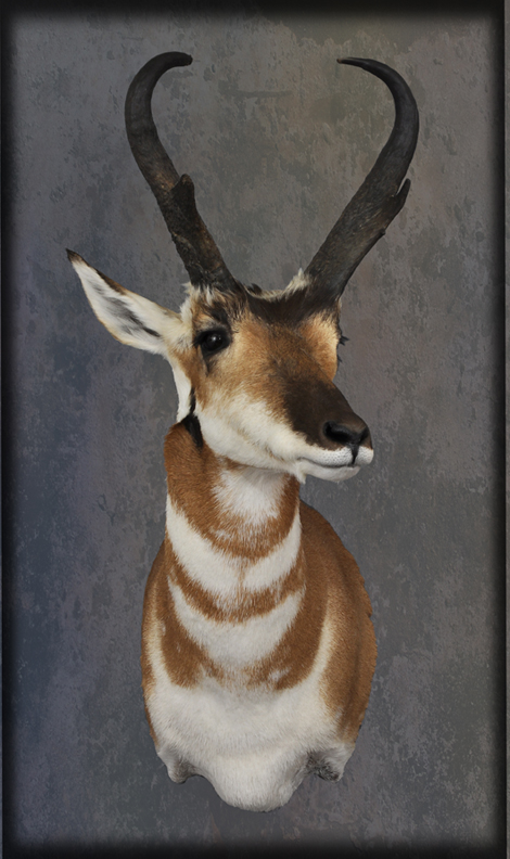 Tietz Taxidermy And Wildlife Art Lebanon Wi
